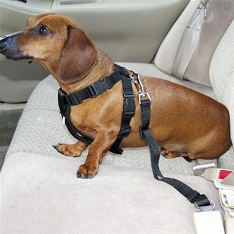 5Color Dog Pet Car Safety Seat Belt Harness Restraint Lead Leash Travel Clip Free Shipping_2 1 dog seat belt a car safety seat belt with universal harness andogo car harness at nearapp.co