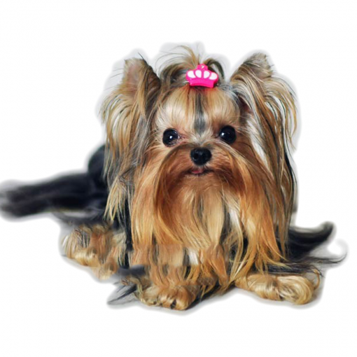 Crown clip for Dogs
