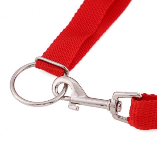 Red leash to train your dog