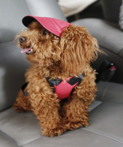 Sun hat to protect your Dog's eyes from the sun